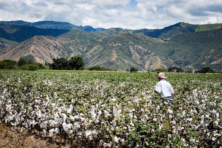 Quels sont les avantages du coton biologique ?